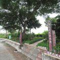 新鐘社區蝴蝶生態河堤公園-新鐘社區蝴蝶生態河堤公園照片