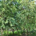 新威苗圃(新威森林公園)-新威苗圃(新威森林公園)照片