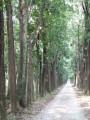 新葳森林公園-桃心木步道~照片
