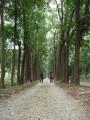 新葳森林公園-桃心木步道1~照片
