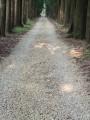 新葳森林公園-桃心木步道2~照片