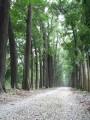 新葳森林公園-桃心木步道3照片