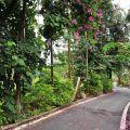 梅嶺(梅嶺風景區, 香蕉山)-梅嶺(梅嶺風景區, 香蕉山)照片