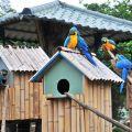 頑皮世界野生動物園-鸚鵡照片