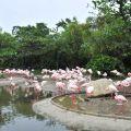頑皮世界野生動物園-紅鶴照片