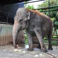頑皮世界野生動物園-大象照片