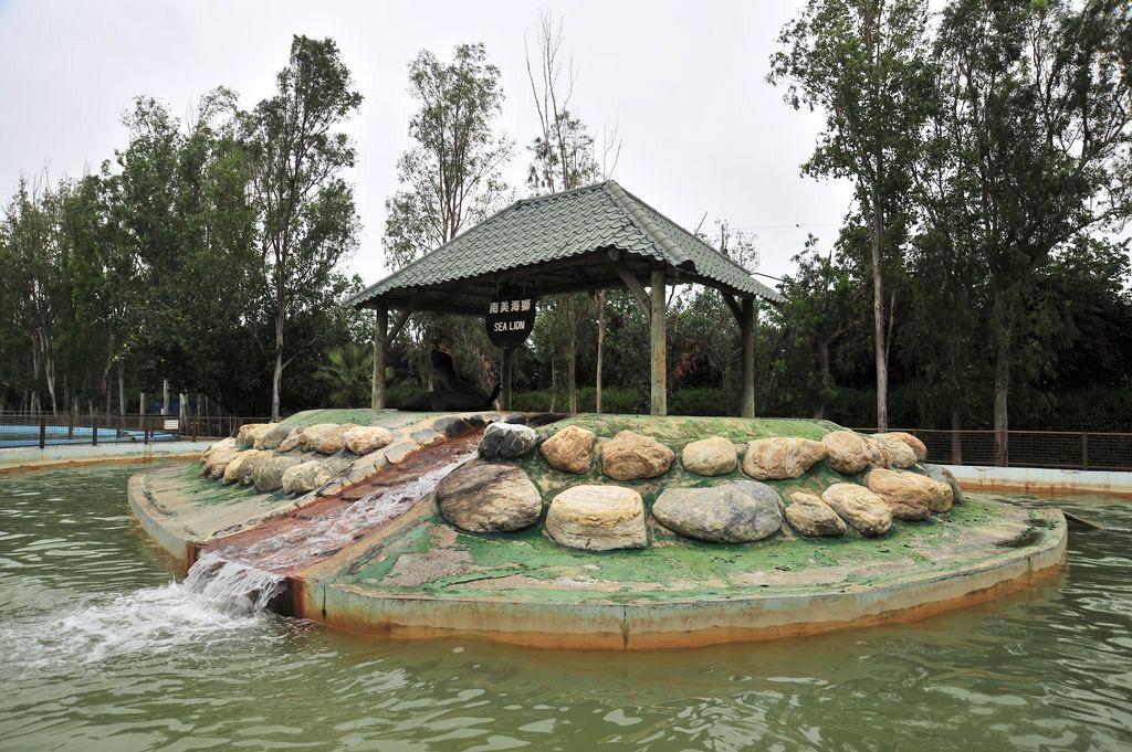 顽皮世界野生动物园-南美海狮照片