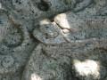 海山館(安平鄉土館)-海山館16照片