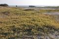 府城天險(鹿耳門溪出海口)-一旁的海岸景觀照片