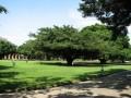 成大榕園照片