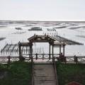 七股潟湖-潟湖堤防上的觀景亭照片