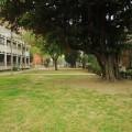 成功大學-成功大學照片