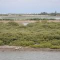 七股紅樹林保護區-拉近看紅樹林保護區照片