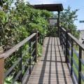 七股紅樹林保護區-觀景台步道照片