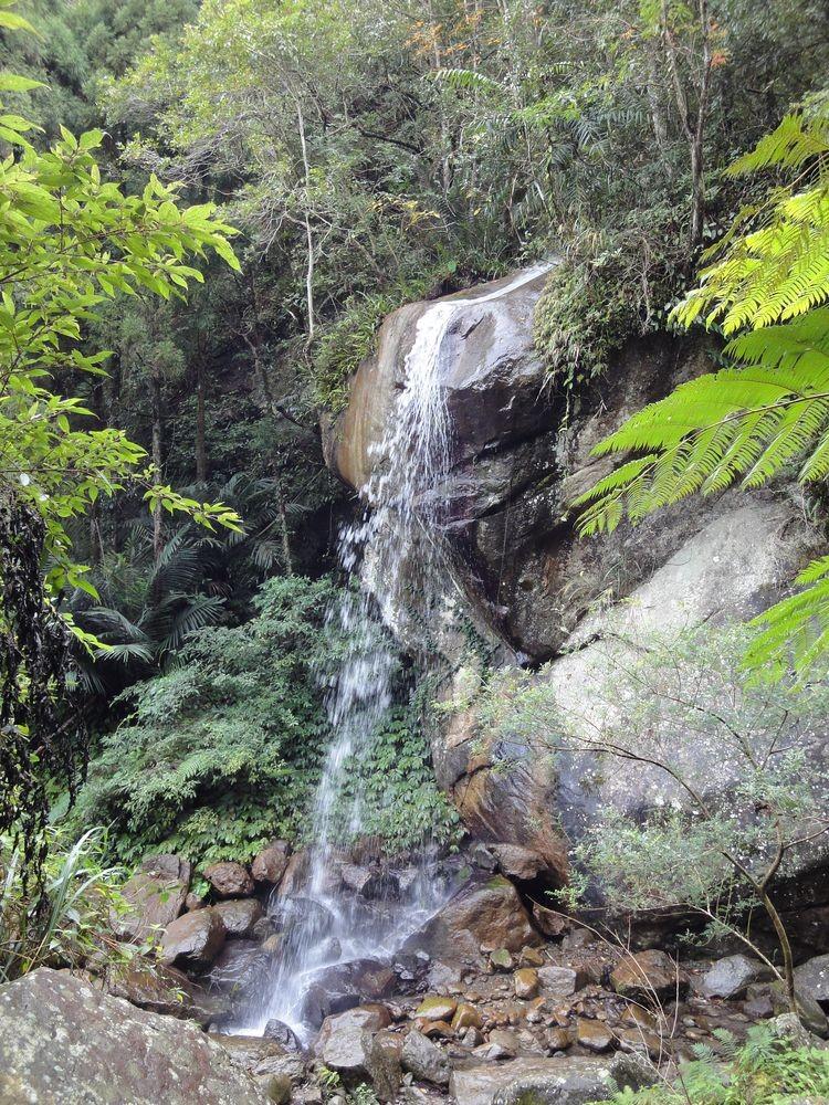 馬武督探索森林主照片