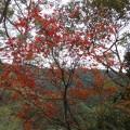 馬武督探索森林-自認為很美的楓樹照片