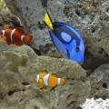 野柳海洋世界-尼莫與多麗照片