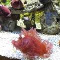 野柳海洋世界-伊豆鮋照片