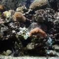 野柳海洋世界-珊瑚社區照片