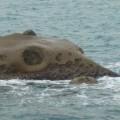野柳地質公園-象石照片