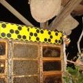 紙箱王創意園區-是真的蜂巢照片