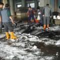 成功漁港-成功漁港照片