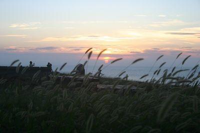 黃金夕陽主照片
