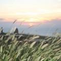 黃金夕陽-黃金夕陽照片