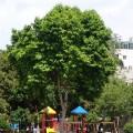 南門公園-台南市南門公園-2004年拍攝照片