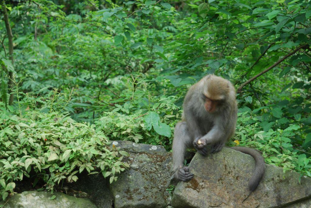 烏山登山步道(台灣獼猴保護區)主照片