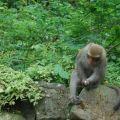 烏山登山步道(台灣獼猴保護區)