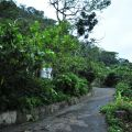 烏山登山步道(台灣獼猴保護區)-烏山台灣獼猴保護區照片