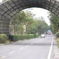 太康綠色隧道-太康綠色隧道照片