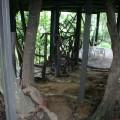 五號樹屋(5號樹屋)-五號樹屋(5號樹屋)照片