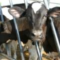 八翁酪農專業區-八翁酪農專業區照片