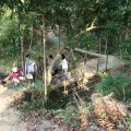 新化國家植物園(中興林場)-中興林場(新化國家植物園)照片