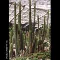 墾丁森林遊樂區-墾丁森林遊樂區照片