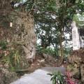 大崗山風景區-超峰寺旁的小徑4照片