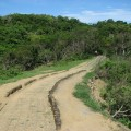 社頂自然公園 (社頂高位珊瑚礁生態保護區)-園區步道照片