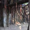 安平樹屋-安平樹屋照片