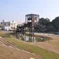 安平樹屋-賞鳥觀景台照片