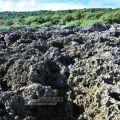 香蕉灣生態保護區-香蕉灣生態保護區照片