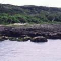 香蕉灣生態保護區-香蕉灣照片