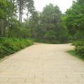 中山紀念林-園林一景5照片