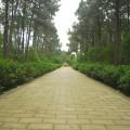 中山紀念林-園林一景4照片