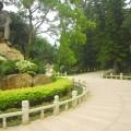 中山紀念林-園林一景2照片