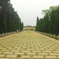 中山紀念林-入口大道照片