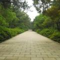 中山紀念林-入口步道照片
