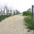 好美寮自然生態保護區-好美寮自然保護區照片