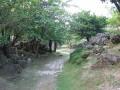 熱帶植物區